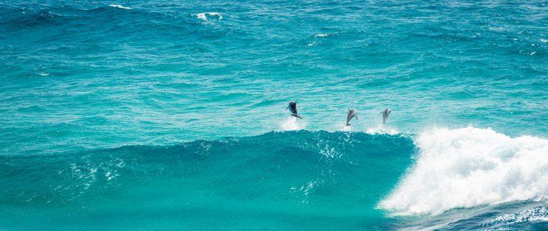 disc geel interactief voorbeeld dolfijn